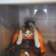 Soins chaton clinique vétérinaire de l'aérodrome à Laloubère, Tarbes