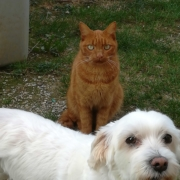 Clinique vétérinaire Laloubère - Tarbes animaux de compagnie
