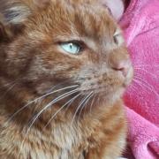 Clinique vétérinaire Laloubère - Tarbes chats