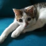 soin chaton clinique vétérinaire de l'aérodrome Laloubère Tarbes