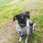 Clinique vétérinaire Laloubère - Tarbes chiens