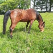 Clinique vétérinaire Laloubère - Tarbes chevaux